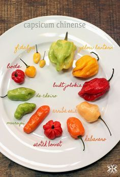 Little guide about peppers- Pequeno guia sobre pimentas chinense capsicum – chinense peppers - Capsicum Chinense, Tummy Yummy, Dehydrator Recipes, Stuffed Hot Peppers, Pizza Recipes, Fruits And Veggies, Diy Food, Food And Drink, Favorite Recipes