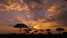 Sunset Acacia Trees Africa Sky 1080p Wallpaper