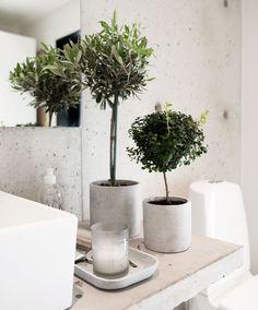 Groene planten in de badkamer. Trend 2016