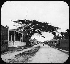 Catano, Puerto Rico, flamboyant tree (League for Social Service, New York, no. 4-3) (Manning Lantern Slide: 563)