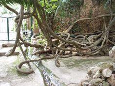 Bonsai, Plants, Botany, Interesting Facts, Majorca, Plant, Planets, String Garden