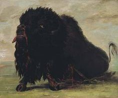 Dying Buffalo Shot with an Arrow 1832 1833 Painting by | George Catlin  kp