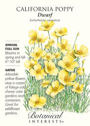 Botanical Interest Seed - Flowers - Page 3 Botanical Flowers, Flowers Nature, House Plant Delivery, House Plants For Sale, Flower Meanings, Fruit Seeds, Herb Seeds, California Poppy, Language Of Flowers