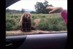 waving bear | Tumblr