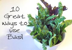 Basil leaf is a wonderful herb that has many uses in cooking, natural medicine, and more. Prevent a headache, sooth an ear infection or reduce blood sugar with basil!