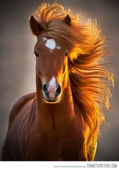 beautiful horse, lovely photograph