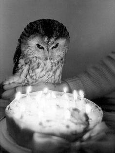 Happy Birthday Owl - vintage image