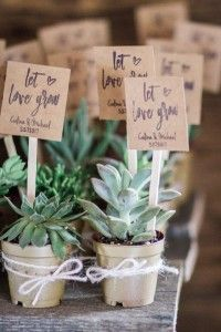 Succulents for weddi
