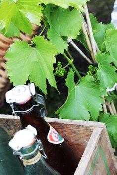 Vintage bottles and grapevine