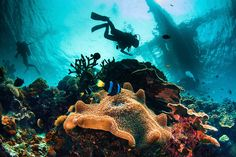 12 Diving spots in the Philippines