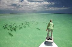 I love bone fishing in the Florida Keys but never seem to have an opportunity like this!