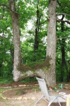 Native American Trail Marker Tree, Georgia