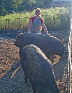 Me and Boris.he is an awesome boar and I love him! He is a Large Black and yes, he is very large! He is a little over 1 yr old here and has more growing to do. I Love Him, Large Black, Elephant, Meat, Awesome, Animals, Love Him, Animales, Animaux