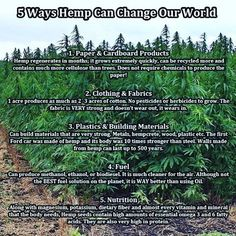 Currently in the United States of America it is illegal to grow Hemp. Clear cutting forests, burning fossil fuels, spraying large amounts of pesticides; all these things and more can be avoided from the production and usage of hemp plants. To clarify, I am talking about Hemp, not Marijuana. Hemp will not get you high, Hemp does not contain enough THC to get you high, if you were to smoke it; you would probably just end up with a headache. Hemp is illegal in the United States because it…