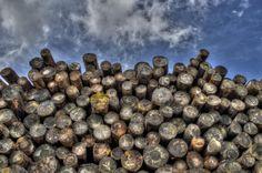 💬 wood lumber logs  - download photo at Avopix.com for free    ✅ https://avopix.com/photo/23383-wood-lumber-logs    #wood #pepper #food #lumber #rock #avopix #free #photos #public #domain