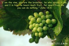 Along with olives, vines, and grains, Macedonians traded fish and livestock with other civilizations as well. This helped develop their culture and expand their knowledge of different trades. Daily Bible Devotions, Free Use Images, Bible Pictures, Free Pictures, Joy Of The Lord, Fruit Of The Spirit, Scripture Verses, Scriptures, Wine Making