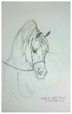 Sha Lazio  Equine art grafiet by Sabien Delhez (NL)