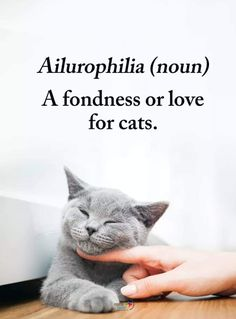 cat quotes Ailurophilia (noun): A fondness or love for cats. I think we all have this, dont we At least, I hope anyone thats ing us does. Crazy Cat Lady, Crazy Cats, I Love Cats, Cool Cats, Image Chat, Amor Animal, Son Chat, Gatos Cats, Here Kitty Kitty