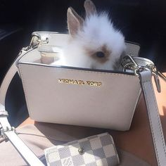 Image de fashion, cute, and bunny