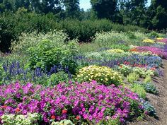 Annual garden at Penn State Arboretum. A riot of color. #pennstate