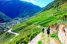 The Chemins des Vignes — a four-mile hike through vineyards and villages in Martigny, Switzerland.   17 Of The Most Beautiful Travel Destinations Of 2014