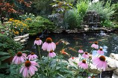 natural landscaping around koi ponds | koi-pond-1