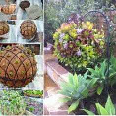 Wonderful DIY Garden Hanging Succulent Ball