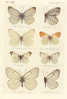 inspiration | butterfly print