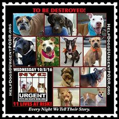 11 DOGS ON  NYC ACC KILL LIST FOR WED. - 10/5/16 - PLEASE FOSTER, EVEN TEMPORARILY OR ADOPT TO SAVE LIVES!