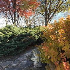 Autumn glow#falldesign #fallcolor #statuary #btowngardens #gardencenter #landscapedesign