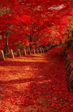 Autumn is a second spring when every leave is a flower! Autumn flowers in Nara, Japan Beautiful World, Beautiful Places, Beautiful Pictures, Image Nature, Nature Nature, Autumn Scenes, Fall Pictures, Funny Pictures, Belle Photo