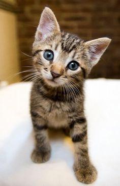 dawww #cute #adorable #animals