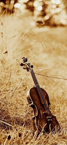 Violin in grass Sound Of Music, Music Is Life, Violin Photography, Violin Art, All About Music, Music Pictures, Music Photo, Types Of Music, Classical Music