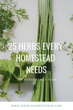 Get The Perfect Herb Garden With These Simple Tips Herb gardening is an excellent way to make sure that your family is getting the best produce that they can. You will not be using any pesticides, and since you are growing everything Herb Garden Design, Diy Herb Garden, Herb Gardening, Container Gardening, Garden Ideas, Types Of Basil, Types Of Herbs, Growing Herbs, Growing Vegetables
