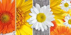 Glückwunschkarte 006704-836, DIN-lang Format, Orange/Gelbe Blumen, inkl. Kuvert http://www.litei.de/glueckwunsch-karten/gluckwunschkarte-006704-836-din-lang-format-orange-gelbe-blumen