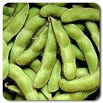 Organic Midori Giant Soybean
