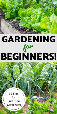 Vegetable gardening for Beginners- do you want to plant your first garden? Check out these 11 tips so you can have your best vegetable garden ever! garden types Gardening for Beginners: 11 Tips for a Successful Start Garden Types, Diy Garden, Garden Care, Herb Garden, Garden Landscaping, Garden Beds, Vegetable Garden Planner, Vegetable Garden For Beginners, Gardening For Beginners