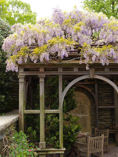 Pergola with a Wisteria.  I plan on doing something similar to this off my back door.