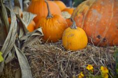 Louise Goes To Canada - Westham Island Pumpkin Patch