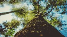 Tree Bark in Huelva photo by Irene Dávila ( on Unsplash Wealth Affirmations, Photography Pricing, Eco Friendly House, Word Of The Day, Green Trees, Nature Pictures, Law Of Attraction, Attraction Quotes, In This World