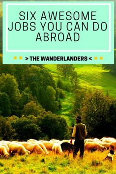 Six Awesome Jobs You Can Do Abroad - The Wanderlanders