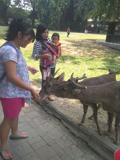 Oh deer ^^ Oh Deer, Four Square, Park, Animals, Animales, Animaux, Parks, Animal Memes, Animal