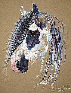 Gypsy vanner by Paulina Stasikowska