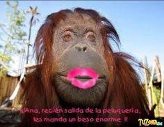 Las 8 Mejores Imágenes De Monos Chistosos En 2016 Funny Images