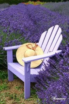 To be able to sit in a purple chair in the middle of purple lavender - heaven.