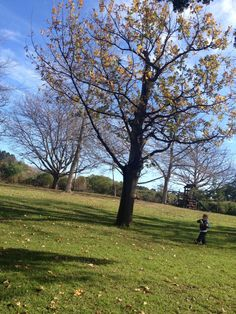 Helderberg Nature Reserve Great place for family picnics, big lawns for kids to run around Jungle Gym, Family Picnic, Run Around, Nature Reserve, Great Places, The Neighbourhood, Trail, Scenery, Country Roads