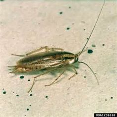 66 best insects beautiful roaches images rh pinterest com