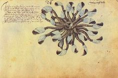 """Zacharias Wagenaer, Cracas. From """"Thier Buch"""" (Book of Animals), 1641"""
