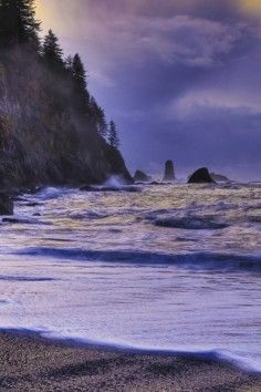 At Olympic National Park in Washington State you can go from breathtaking mountain vistas to colorful ocean tidepools.