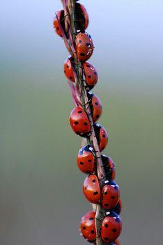 Ooh I love ladybugs!
